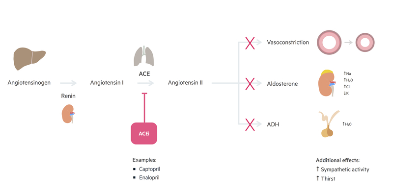 ACE inhibitor mechanism of action