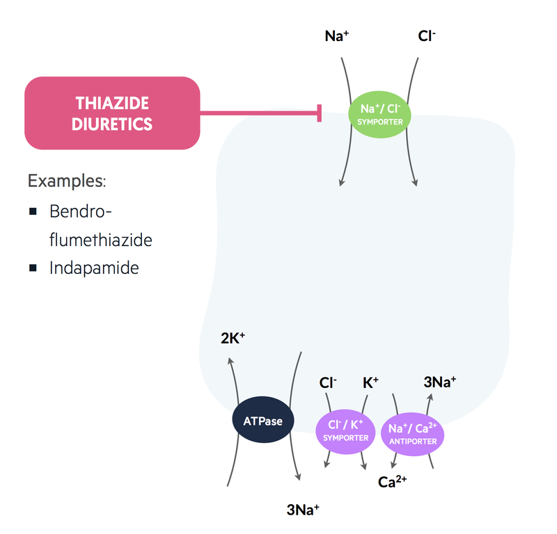 Mechanism of action of thiazide diuretics
