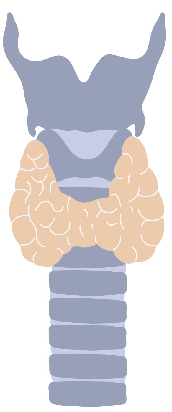 Pulsenotes | Thyroid anatomy notes