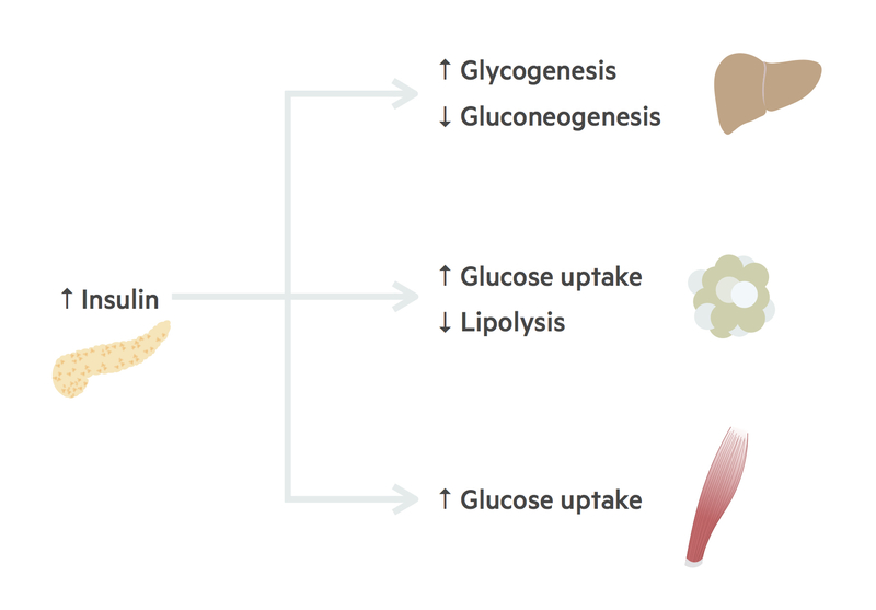 Post-prandial state insulin