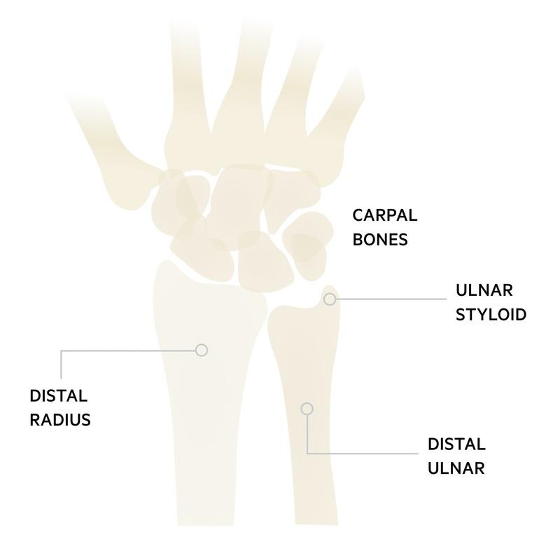 Wrist anatomy
