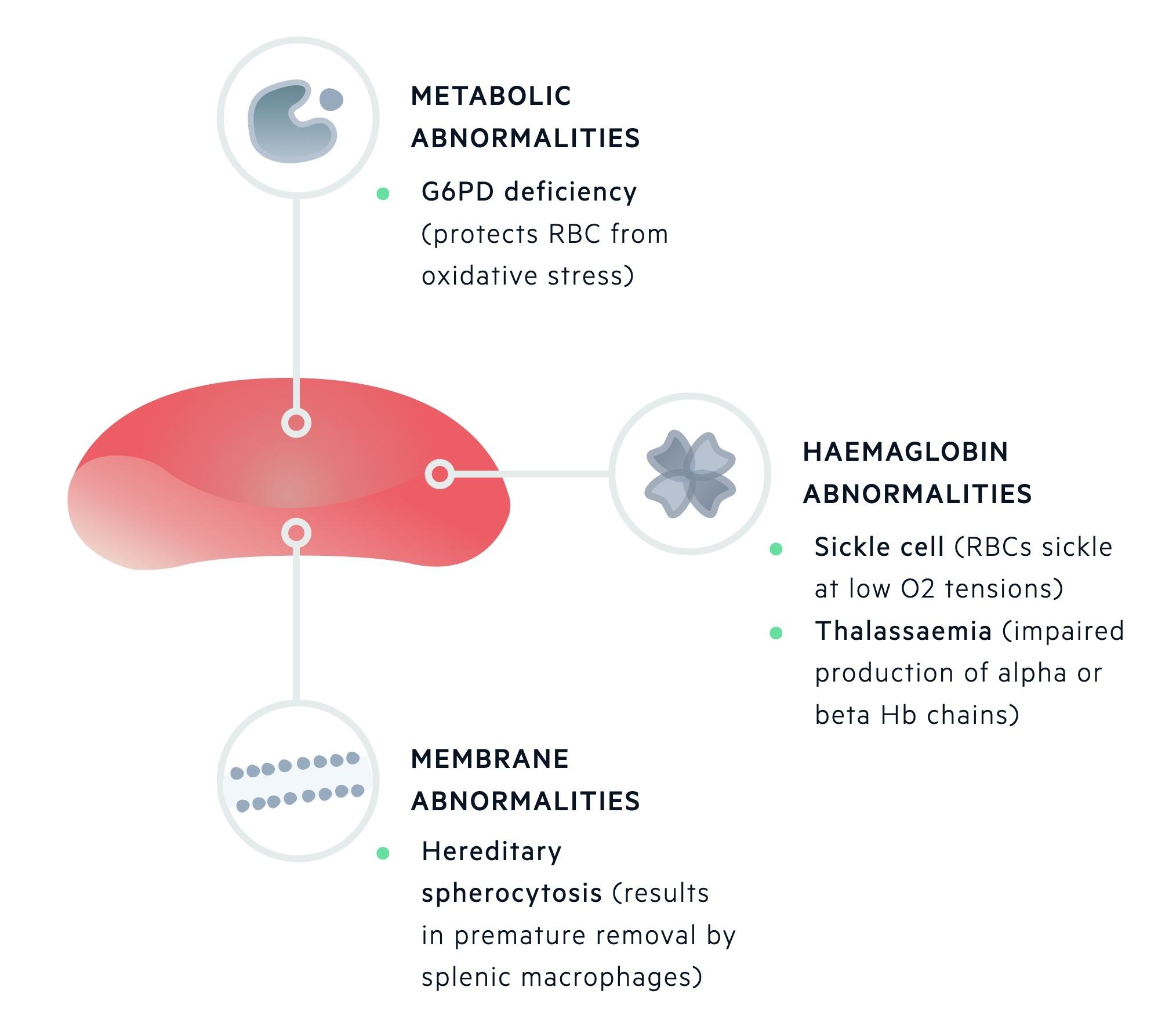 Inherited haemolytic anaemia