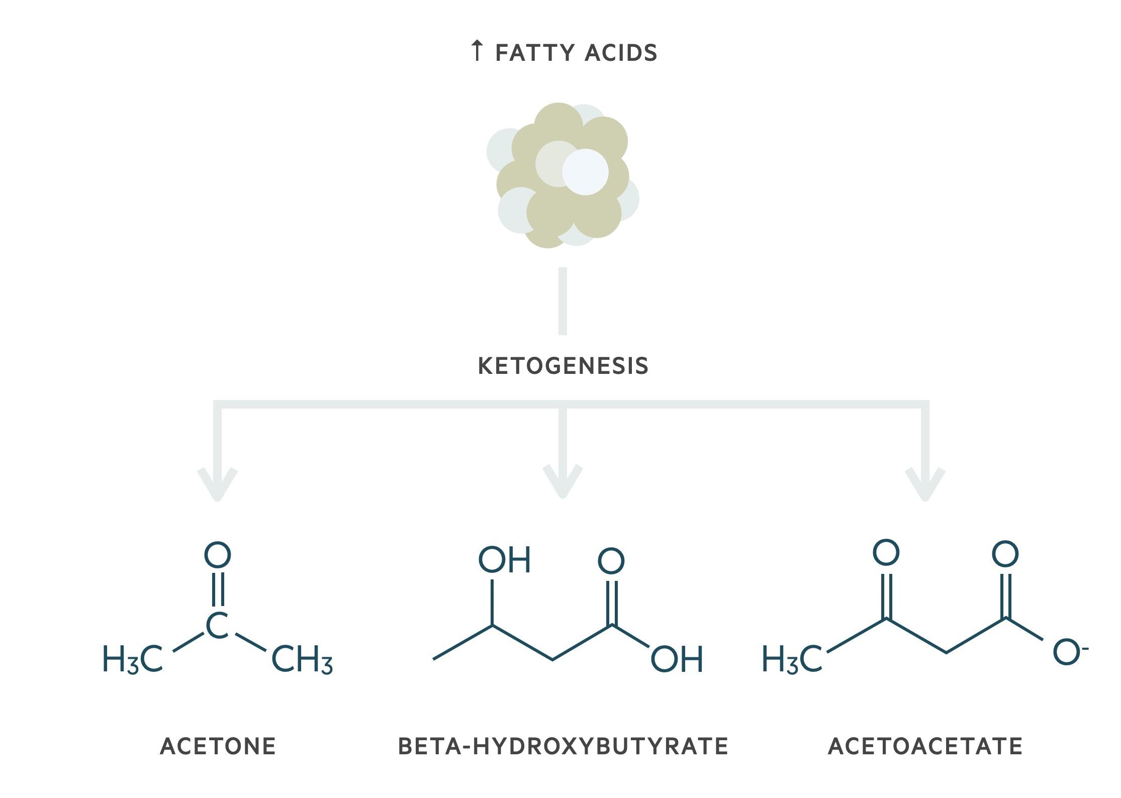 Pathogenesis of DKA