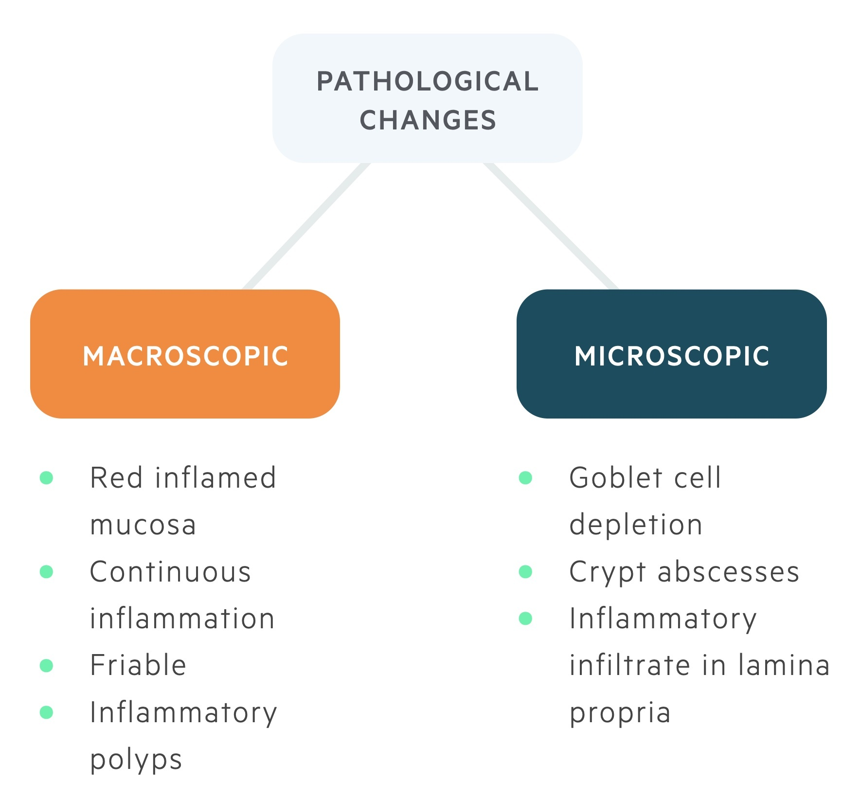 Macroscopic and microscopic changes in UC