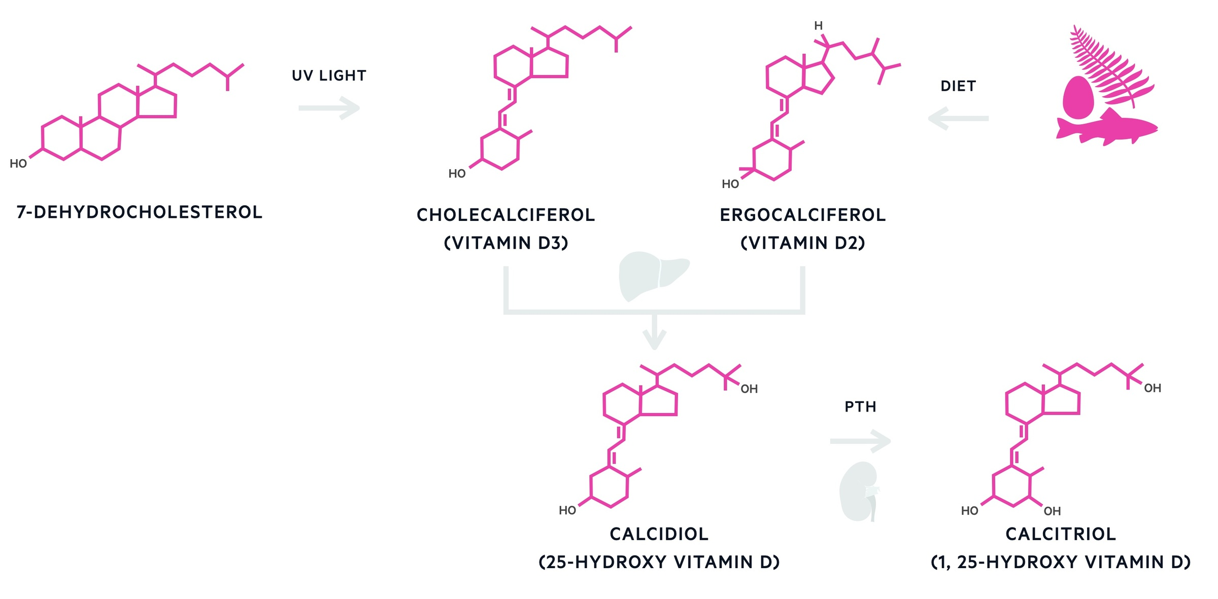 Production of calcitriol (activation of vitamin d)