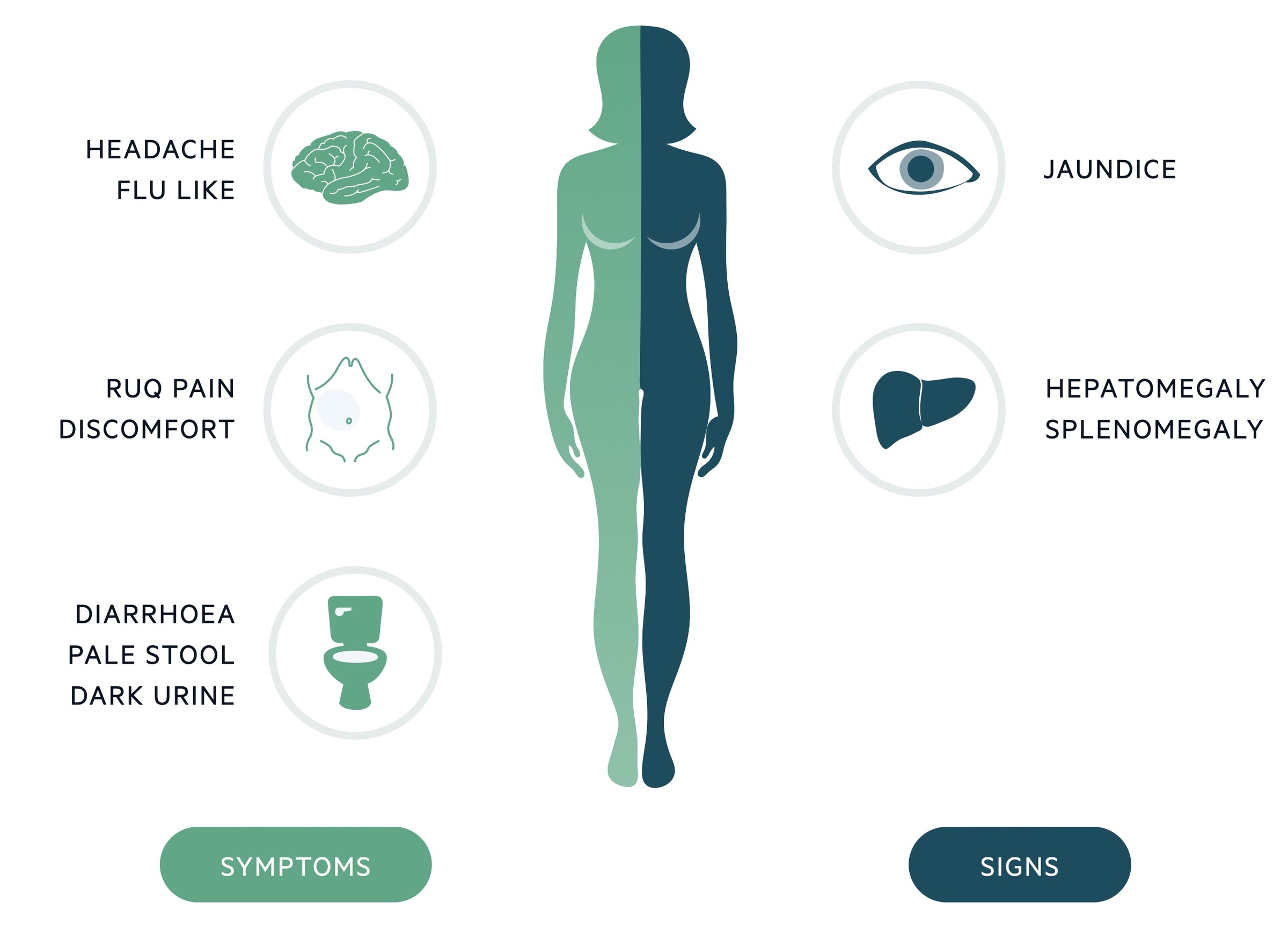 Hepatitis A clinical features