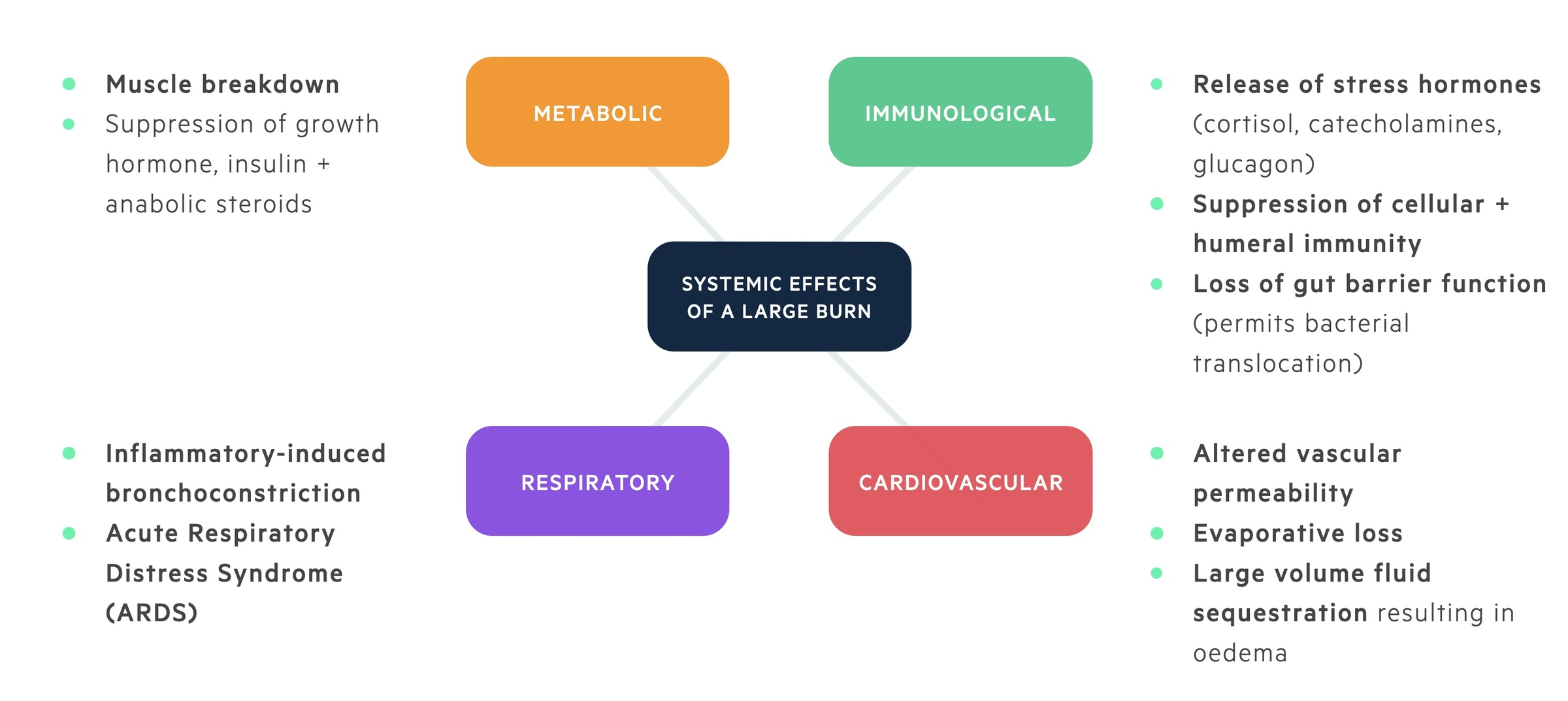 Systemic effects of a large burn