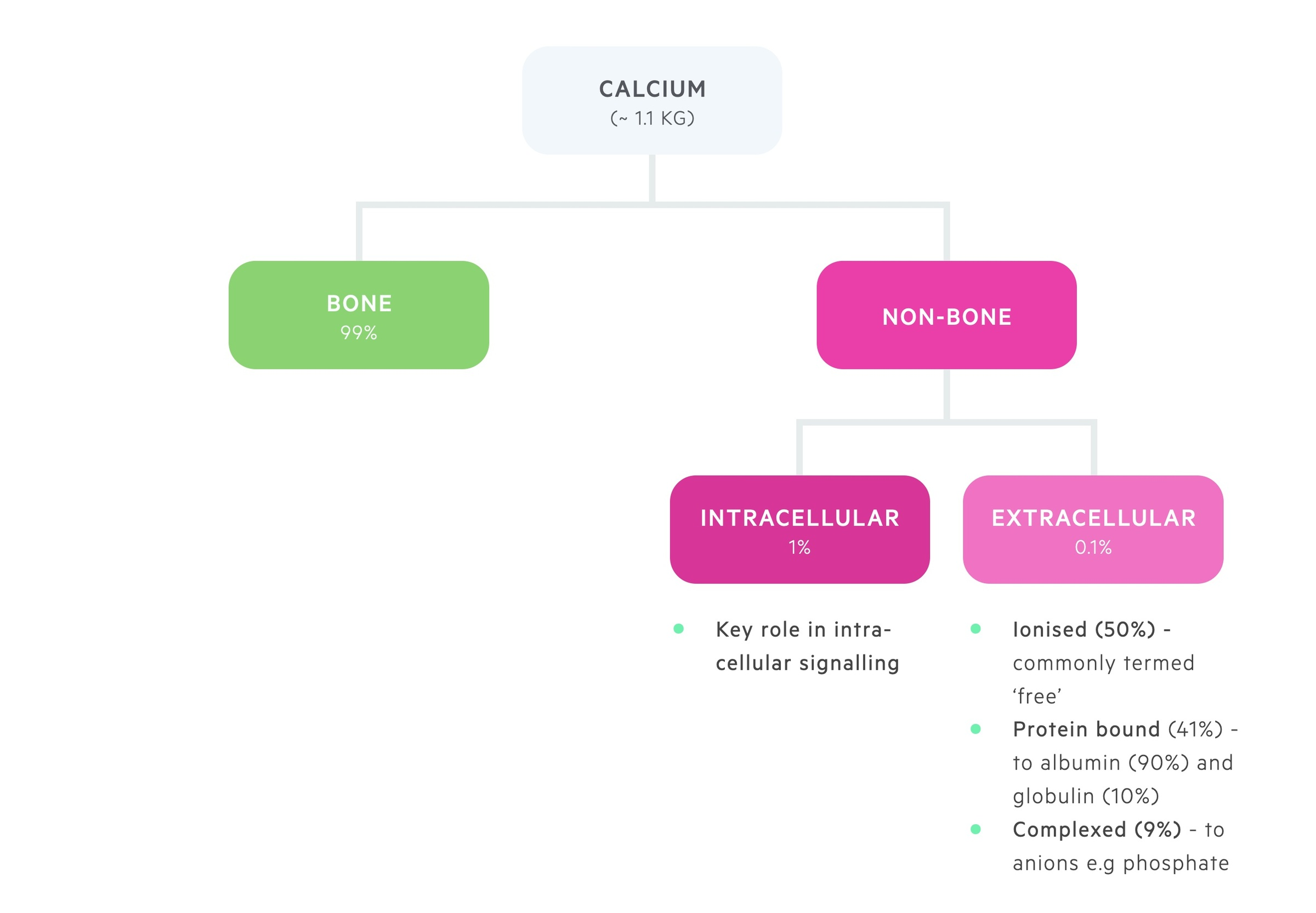 Distribution of calcium in the body