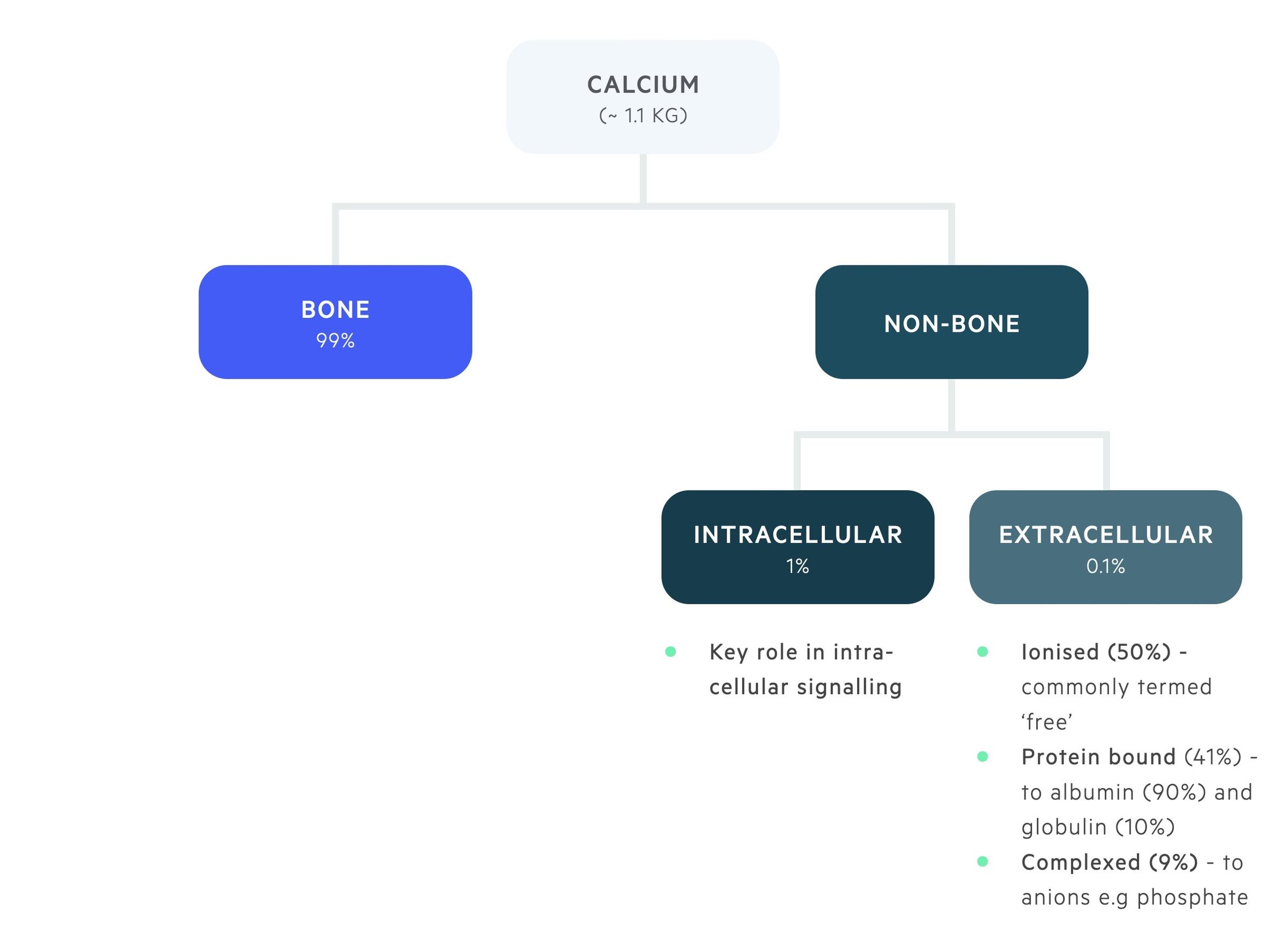 Calcium distribution
