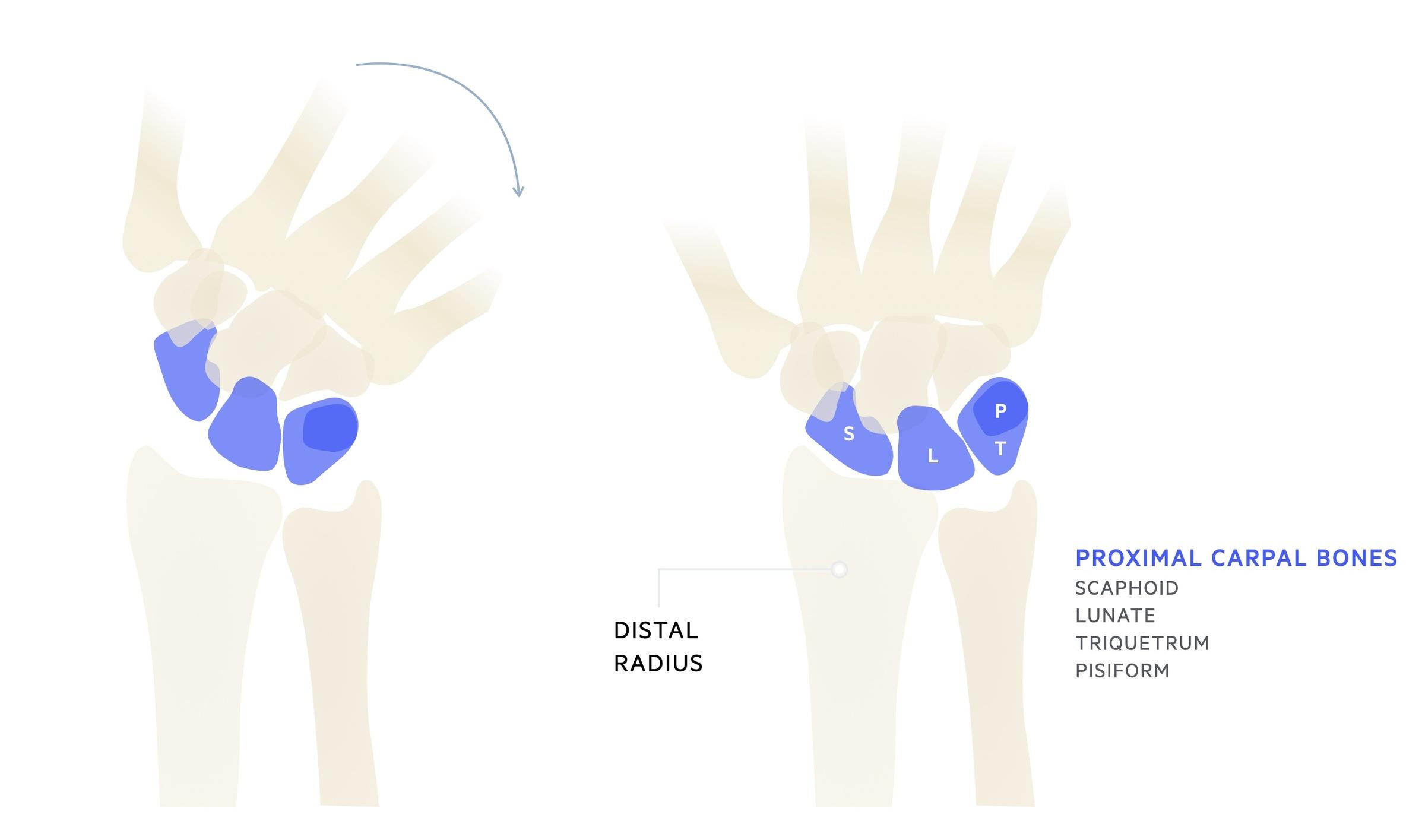Radiocarpal joint