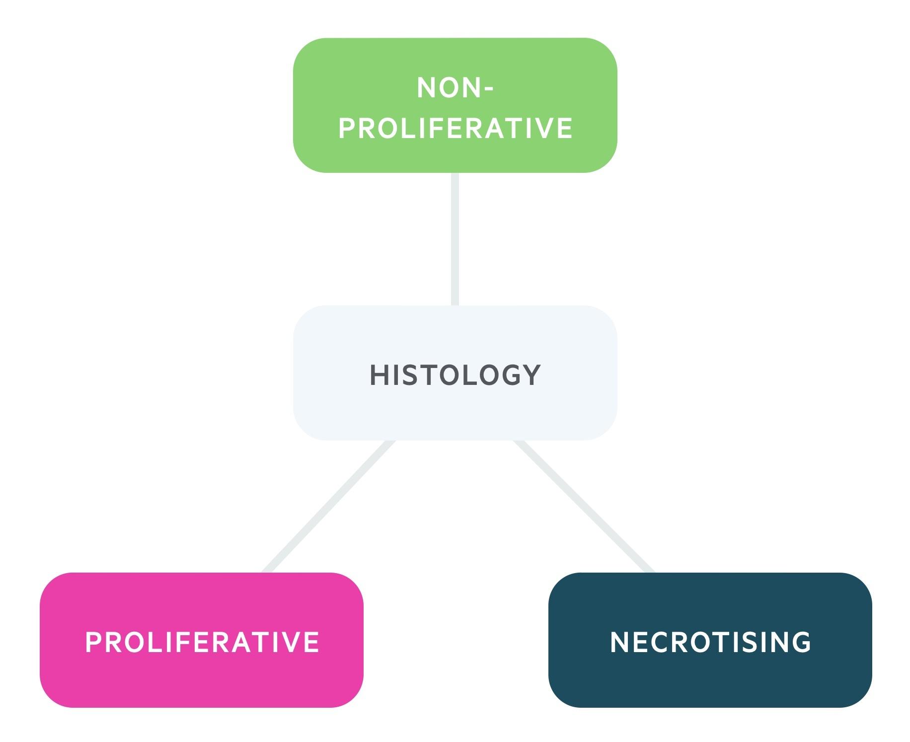 Histology of glomerulopathies