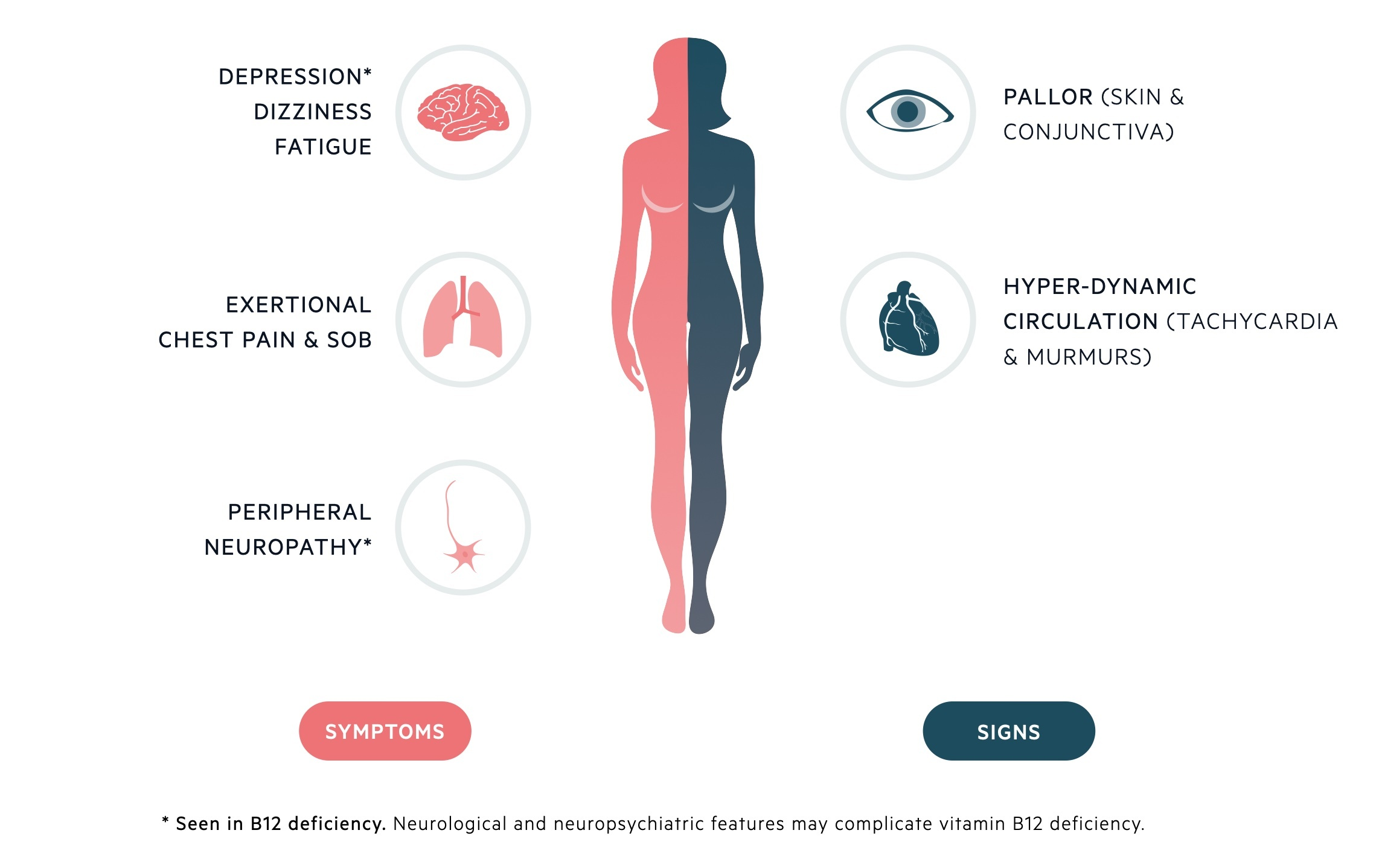 Clinical features of macrocytic anaemia