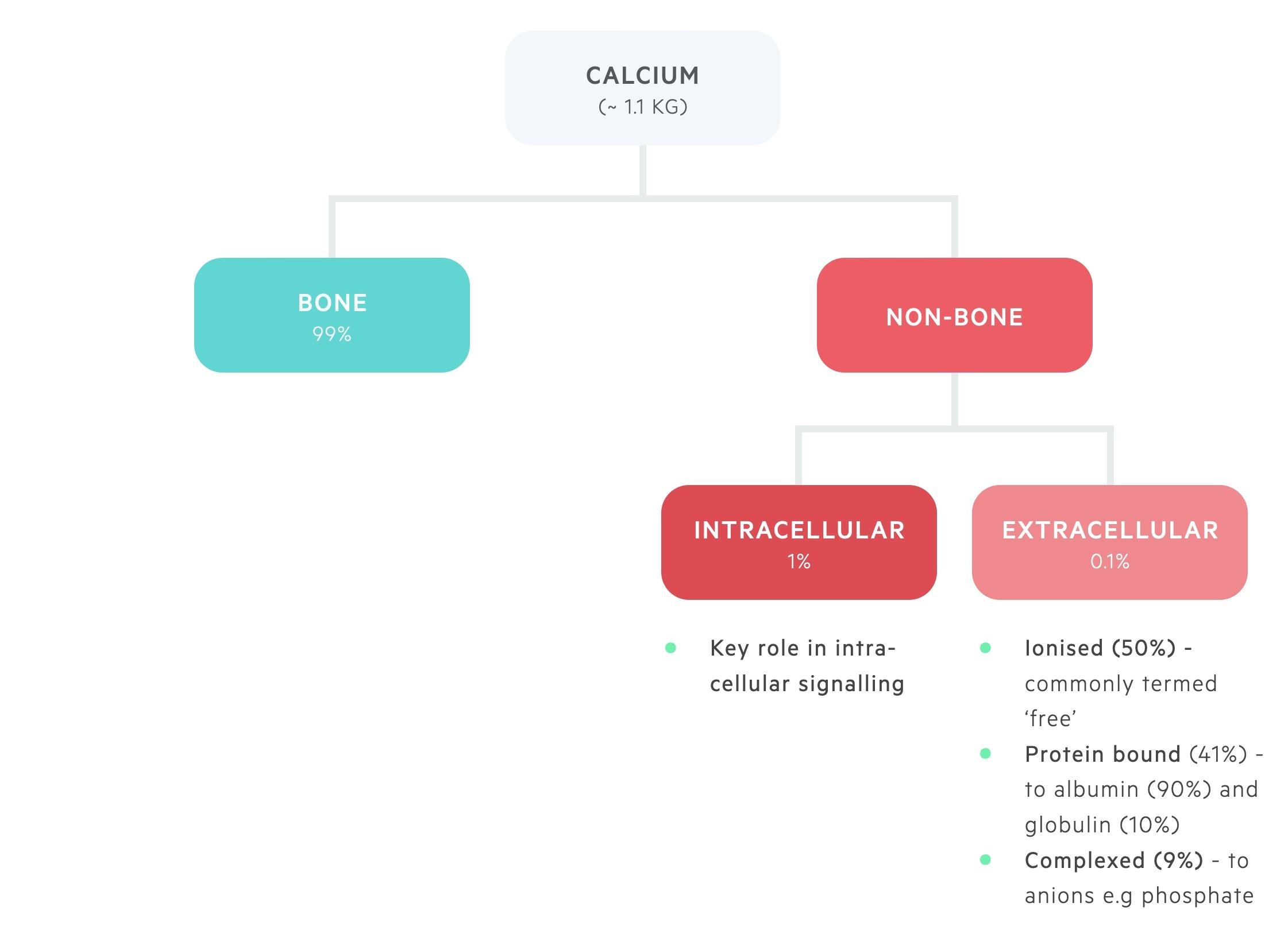 Calcium distribuition