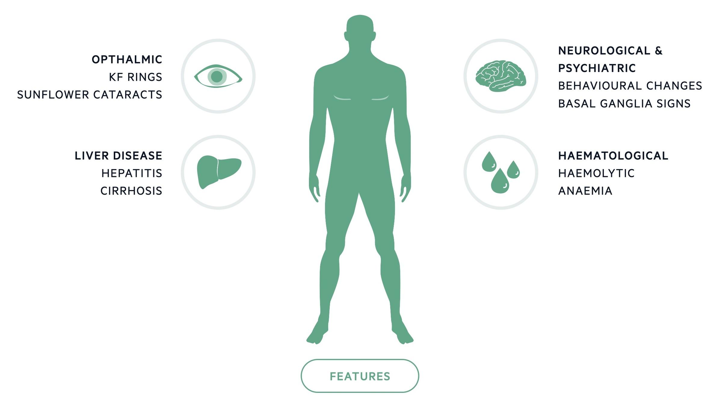 Features of Wilson's disease