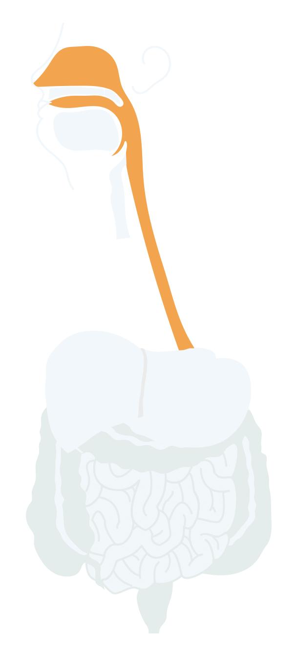 Oral cavity, pharynx and oesophagus