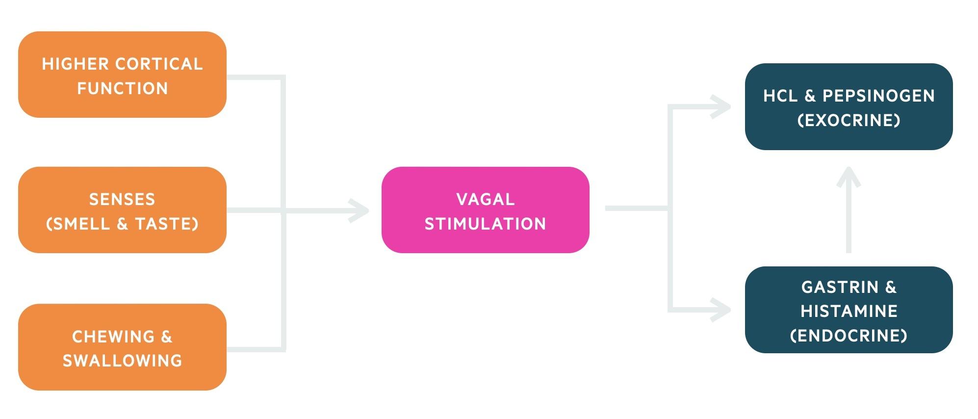 Cephalic stage of digestion
